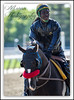 American Hero (EASY GOER) Tags: horses horse ny sports racetrack race canon track belmont competition racing 7d athletes sporting thoroughbred equine thoroughbreds