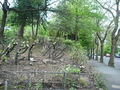 Kelvingrove Park (martha_glasgow) Tags: 18052013