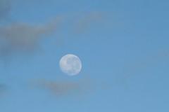 Moon setting over Waitakere Ranges (Zelda Wynn) Tags: sky moon sunny auckland lunar moonset troposphere waning westauckland zeldawynnphotography