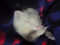 Hugito en su mejor siesta (eitb.eus) Tags: fauna jon g1 munitibar eitbcom 30115 tiemponaturaleza mikelaguirre