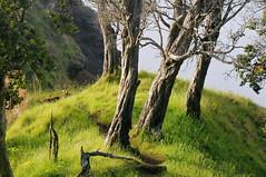 Billy goat ridge (Brian Howell) Tags: hawaii kauai