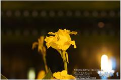 DSC04960 (Lens Heimat) Tags: f55 meyeroptik 15cm telemegor
