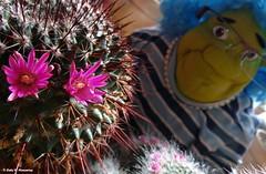The smile of nature :))) La sonrisa de la naturaleza (Caty V. mazarias antoranz) Tags: flowers espaa flores nature spain colores thesmileofnature lasonrisadelanaturaleza