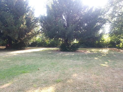 Irgendwo links vom Baum: Eichhörnchen