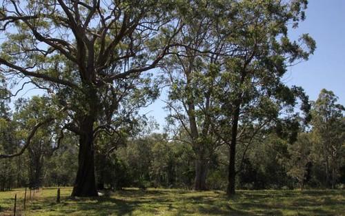 5 Williams Road, Cawongla NSW