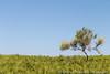 Agrimusco-7 (JoySadaro) Tags: panorama nature landscape natura agrimusco
