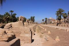 Luxor temple, Luxor, Egypt (Mohamed_Abbas) Tags: temple egypt luxor 550d eos550d
