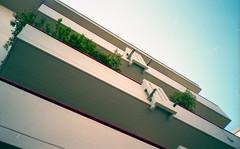 Plants vs Balconies (Minchioletta) Tags: sky plants vintage lomography cameras cielo balconies piante olympusxa 100iso balconi agfavista200 analogicait