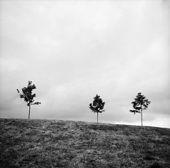 Levensau (MrBantas) Tags: trees 100 rodinal bume kiel voigtlnder perkeo fomapan adox adonal levensau