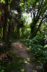 Quiet Path along the Hillsborough River (Mike Woodfin) Tags: park county color green art heritage history nature canon river tampa photography photo cool nikon pretty fuji florida photos path awesome country picture palm photograph historical fl hillsborough sulphursprings hillsboroughcounty mikewoodfin mikewoodfinphotography