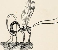 Anglų lietuvių žodynas. Žodis ovipositor reiškia n zool. kiaušdėtis lietuviškai.