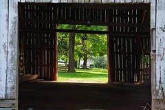 Thru The barn Door (redhorse5.0) Tags: barn photostream whitebarn barndoor oldbarn cattlebarn farmbarn smyrnatennessee sonya850 redhorse50 samdavishouse
