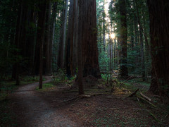 Walk Tall (Beau Rogers) Tags: california trees northerncalifornia forest landscape hiking scenic trail redwoods norcal humboldtcounty pathway hikingtrail humboldtredwoods humboldtredwoodsstatepark redwoodsnationalpark
