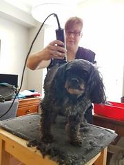 family austin dog grooming clipper hair cut