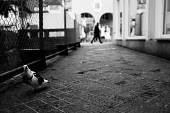 Dove and man (stefankamert) Tags: stefankamert street dove man blur blurred dof bokeh highcontrast perspective noir noiretblanc monochrome fujifilm fuji x100 x100s blackandwhite blackwhite schwarzweis