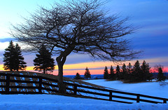 Silhouetted trees at the blue hour (Daniel Q Huang) Tags: trees silhouettes winter snow hills sunlight dawn glow clouds outdoor farmland glowing