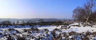 Veluwezoom in the winter