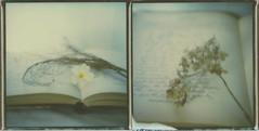 Remembrance (l'imagerie poétique) Tags: limageriepoétique poeticimagery poalroidsx70 tip600colorfilm diptych dreamy stilllife naturemort rêveur