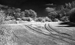 Crop lines (Explored) (graber.shirley) Tags: infrared guildford