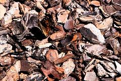 camouflage (Leonard J Matthews) Tags: bark chips environment nature butterfly camouflage hidden hide creation australia mythoto brown orange