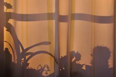 crazy window (nirak68) Tags: lübeck schleswigholsteinkreisfreiehansestadtlübeck deutschland ger 108365 crazywindow fenster shadows pflanzen plants schatten gardine crazytuesdaytheme 7dwf 2017ckarinslinsede 52of2017 window 18