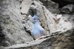 A bird's eye (Daniel Zwierzchowski) Tags: bird eye eos550d eos 550d 18135 animal wild wildlife