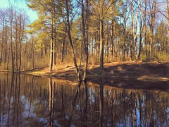 Spring reflections (Elena Penkova) Tags: nature landscape spring reflection woods forest pine tree iphoneography