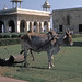 Found Photo - India - Delhi - Red Fort