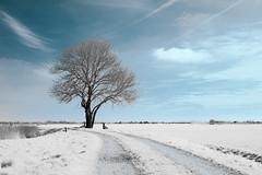 The Tree (Herman1705) Tags: hensbroek noordholland nederland obdam heerhugowaard wogmeer boom tree ennamünchen lithagon 28mm a500 fullspectrum lente spring nik infrared ir