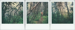 Parque nacional de Garajonay Triptych 3 (sycamoretrees) Tags: 600 analog canarias canaryislands color600 color600201512 color600generation30 film fog forest garajonay girl impossible instantfilm integral integralfilm lagomera laurelforest laurisilva marianrainerharbach moss nationalpark parquenacionaldegarajonay path polaroid rainforest slr680 spain subtropics trail trees triptych woman