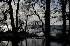 Trees (MeEvita) Tags: nikon d300 photography nature sea trees spring sweden