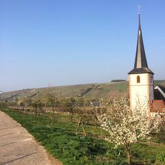 Stammheim - Kirche in den Weinbergen (barockschloss) Tags: stammheim germany bayern bavaria franken kirche churche weinberg vineyard nature outdoors landschaftz blossom obstblüte