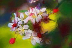 Prismatic (GeminEye27) Tags: filterforge polygonfilter topazsimplify oilpaintfilter crabapple flower photopainting