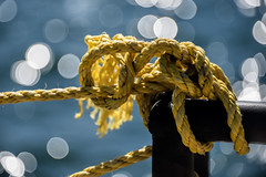 The Knot (WilliamND4) Tags: knot bokeh rope nikon d810