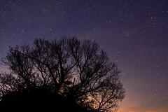ESTRELLADO (6toros6) Tags: alfredo aficionados azul sombras d7100 flickr12days noche juego nikon luz navarra naturaleza nocturna peralta paisaje invierno cielo tronco estrellas monte negro campo