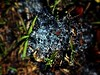 Shards (Anacon landwalker) Tags: shards plastic earth outside blue water grass nature ground glass