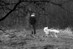 _stiller feiertag (SpitMcGee) Tags: karfreitag goodfriday stillerfeiertag spaziergang hund mann spitmcgee explore 322