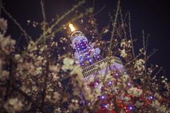 Tokyo Tower 東京鐵塔 |東京都 Tokyo (里卡豆) Tags: olympus penf 日本 關東 東京 tokyo 東京鐵塔 25mm f12 pro 2512pro