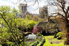 York Minster from City  walls (robin denton) Tags: yorkminster minster church gothiccathedral gothic gothicarchitecture historicbuildings history cathedral york northyorkshire yorkshire building