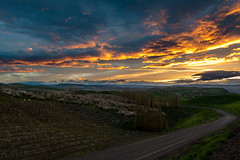Sunset (tyee01) Tags: the dalles oregon sunset orchard columbia river gorge spring green cherry nikon d500 1680mm