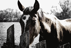 Horse ... (Just Julie - Photography) Tags: horse different nature animal