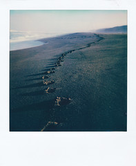 Point Reyes, CA - South Beach (michaelbehlen) Tags: polaroid polaroids instant film nature landscape seascape pacific ocean point reyes south beach california sun 660af impossiblefilm impossibleproject analog