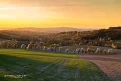 blühende Frühlingsdämmerung (Stadlmayr Photography) Tags: 6d 24105l canon frühling spring sunset sonnenuntergang scharten hausruckviertel landschaft felder kirschblüten austria