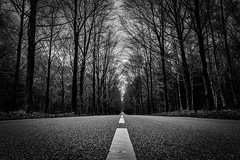 Going Nowhere (B. Versteeg) Tags: forest hilversum lage vuurshe fuji xt1 18135mm fujinon holland zwart wit black white trees weather road lines cars outdoor hdr contrast weg