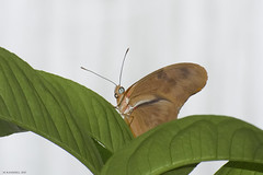Butterfly 2017-10 (michaelramsdell1967) Tags: beauty spring color eyes macro flower light animals beautiful closeup natural plant nikon butterfly animal white green insect vivid garden insects wildlife picture vibrant bug butterflies bugs upclose