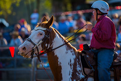 Blue-eyed-horse_DSC5635 (Mel Gray) Tags: dungogrodeo dungogrodeo2017 dungog newcastle hunterregion annualevent eastersaturday melgrayphotography cowboys cowgirls equestrianevents