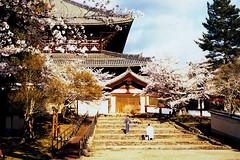 Japon 2014 - Nara (romuleald) Tags: film japan analog iso400 olympus 400 fujifilm nara dear japon nihon argentique daim rdp nationphoto japon2014