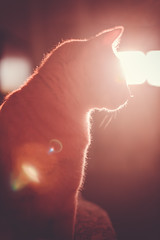 Fenix (MiuMiuKitty) Tags: red cats sun nature beautiful animals cat spring russia profile kitty fenix sphynx saintpeterburg prifile peterbold ilobsterit