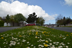 Floral carpet - F-DSC_0324 (John Hickey - fotosbyjohnh) Tags: ireland dublin white nature beautiful daisies nikon tamron springflowers yellowflowers dandelions greengrass whiteflowers foxrock d5100