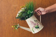 Plants all over (11/52) (stephaniereis.) Tags: flowers plants cute green nature holding hand sweet holly lovely delicate decor eco girlie wateringcan watering wateringpot 2014 regador canoneos60d stephaniereis stephaniereiscom